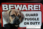 Puggle Guard Dog on Duty