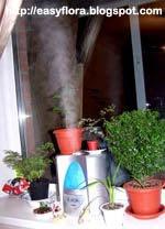 Увлажнитель воздуха и растения