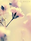 إن أجمل آثار الكاتب أو الشاعر هي التي لم يكتبها ..