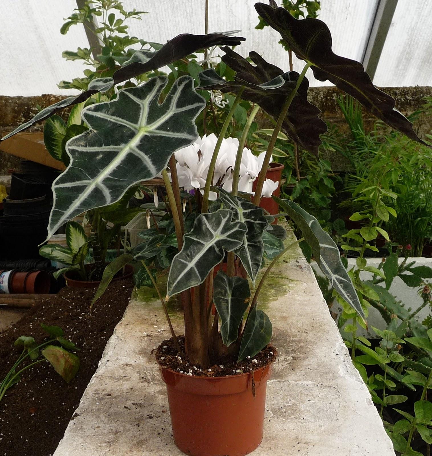 крупные фото цветка орхидеи
