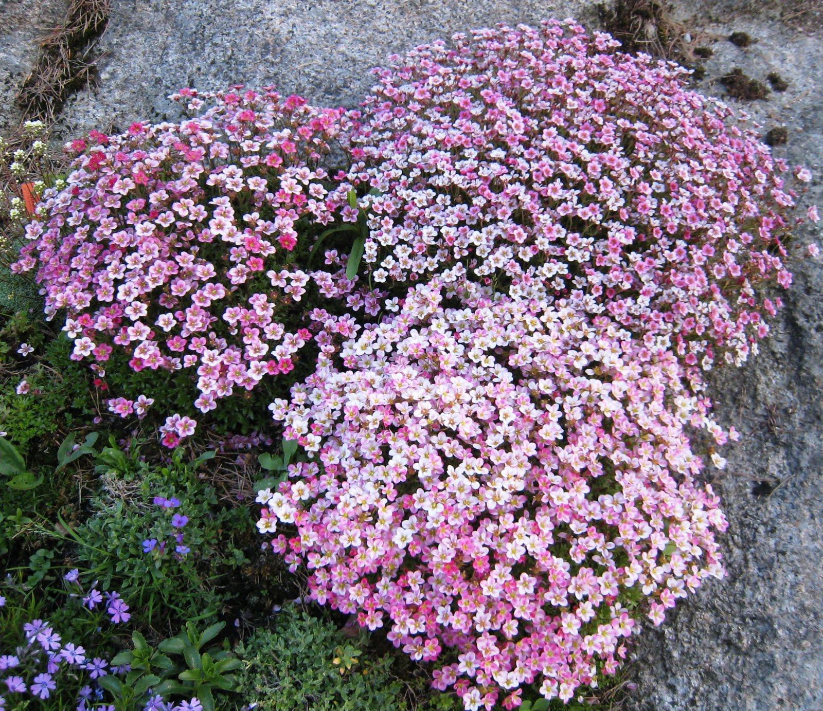 Bunndekkende blomster