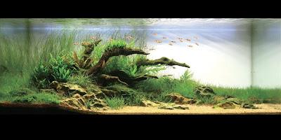 Dream aquarium planted tanks 24 pics curious funny for Dream of fish tank