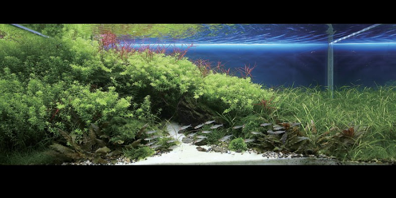 Dream Aquarium planted tanks 24