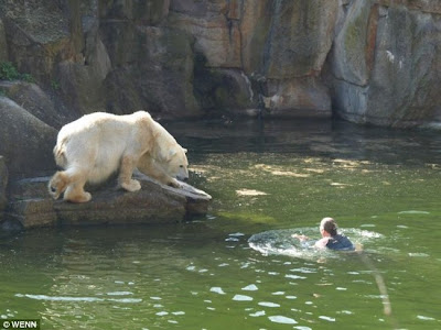 bear tattoo Bear tattoo. Polar Bear Attacks Woman At Berlin Zoo