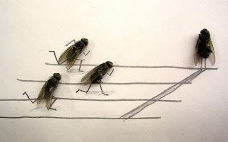 Creative Art in Fly dead body