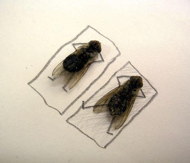 [dead-fly-art-09.jpg]