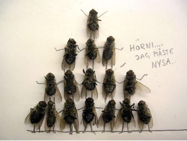 [dead-fly-art-08.jpg]