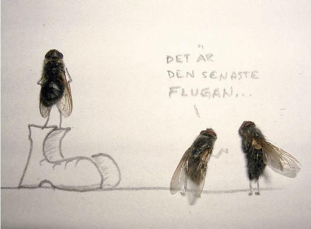 [dead-fly-art-03.jpg]