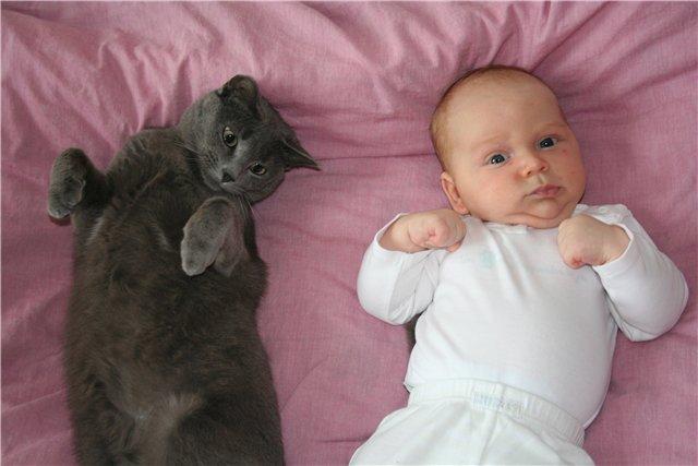 Малыш, кот, смешно, baby and cat