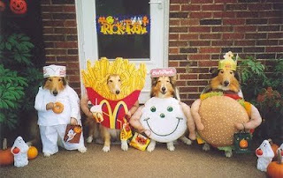 Funny - Dog in costume