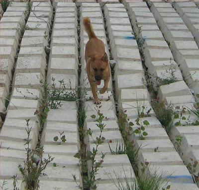 כלב ציד רץ על המקלדת