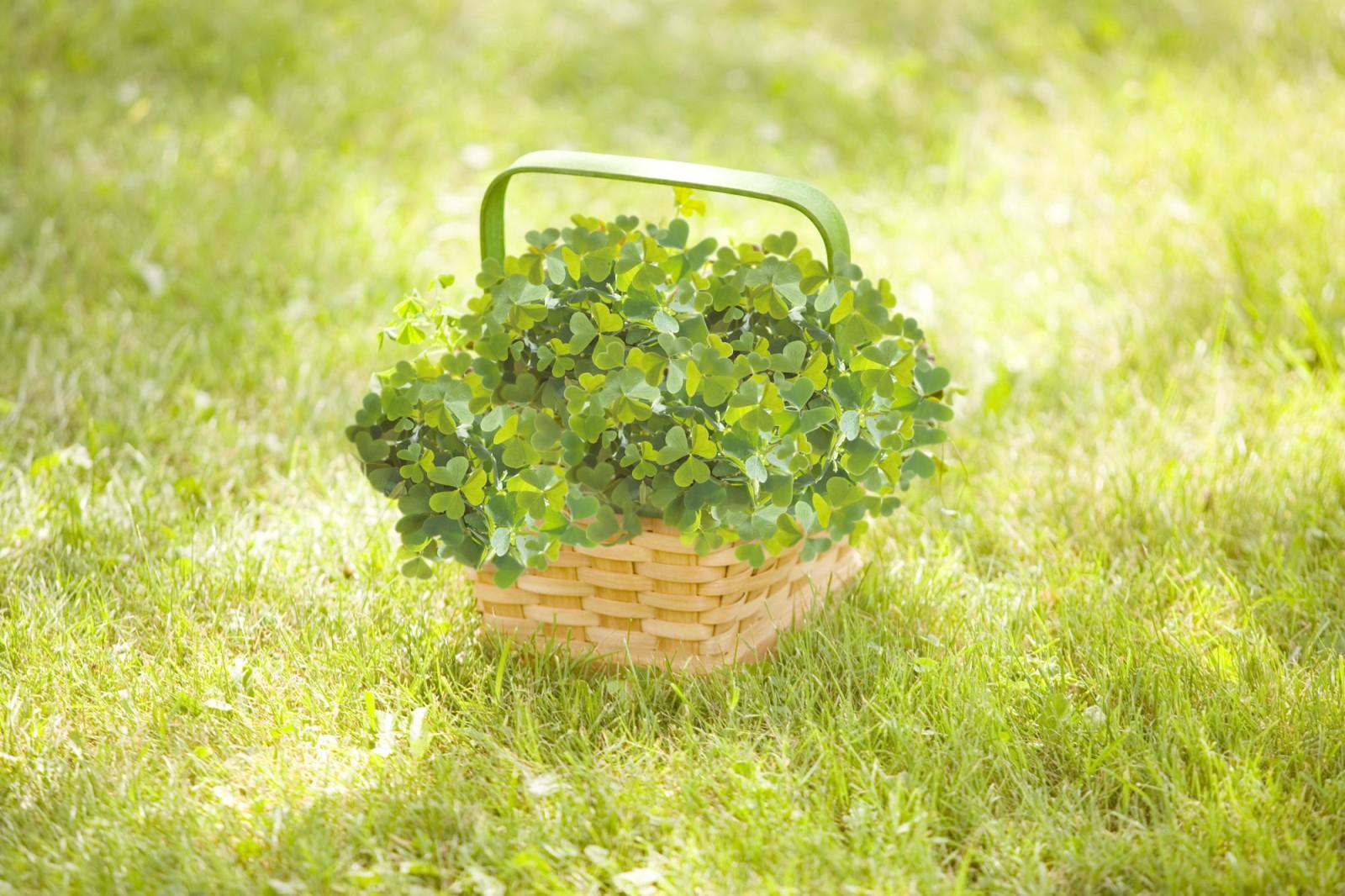 http://1.bp.blogspot.com/_b-YuSdvMmaQ/SwlbssRrUyI/AAAAAAAADbE/7O1YSCe2t0g/s1600/basket+of+clover.jpg