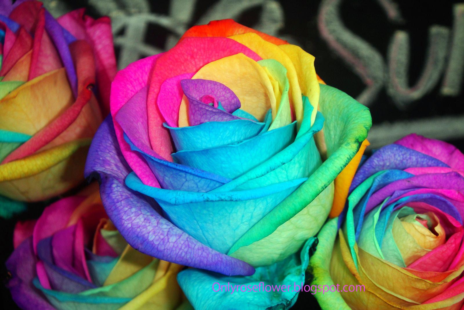 http://1.bp.blogspot.com/_b-YuSdvMmaQ/TMSKUkWn1FI/AAAAAAAAIUQ/3OlyDAPkVkQ/s1600/DSC07804.jpg#multicolor%20roses%201600x1069