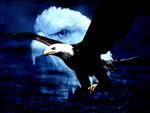 Eagle spirit in 7 precepts