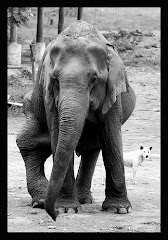 Elephant Rescue at ENF Thailand