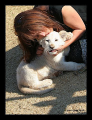 Rare White Lion Cub in South Africa