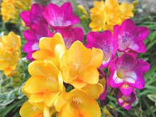 Fresia, la flor preferida de mi Noé