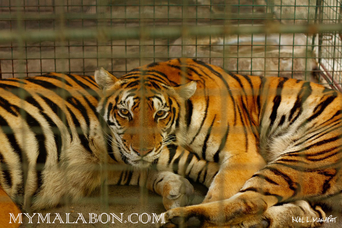 STONECPS: Malabon Zoo: A glimpse and a review