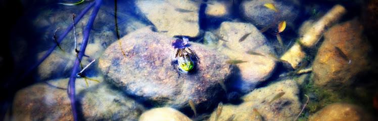 Pond King