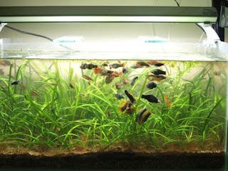 Aqua Nature FullTankView