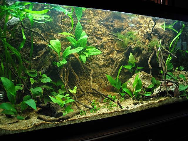 aquarium background looks dull - fixing aquarium backgrounds inside your tank using background ...