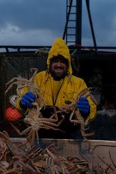 Monte sorting crab