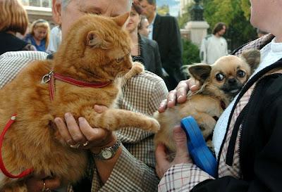 Perros contra gatos