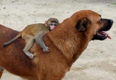 Perro y macaco