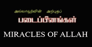 MIRACLES OF ALLAH (Tamil) AMAZING ANIMALS