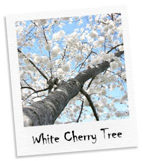 white cherry tree