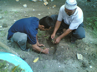 penanaman gaharu di mesjid agung oleh Mujiono dan BKM