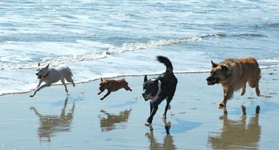 Pet Friendly Beach Hotels In Nj