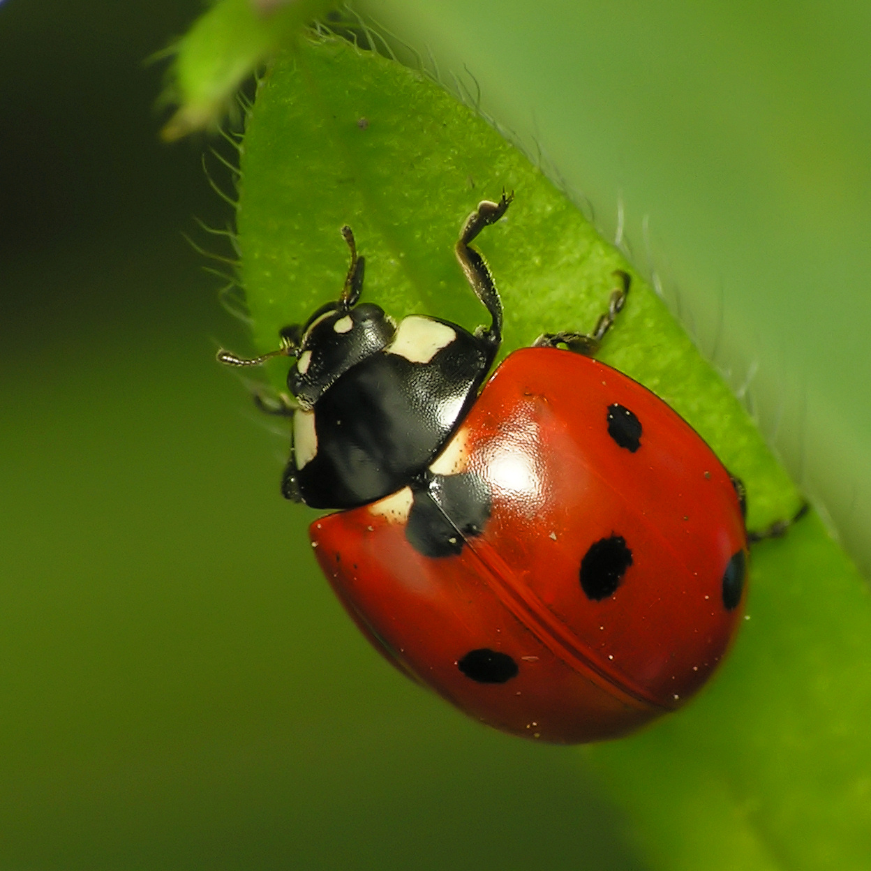 What do ladybirds look like