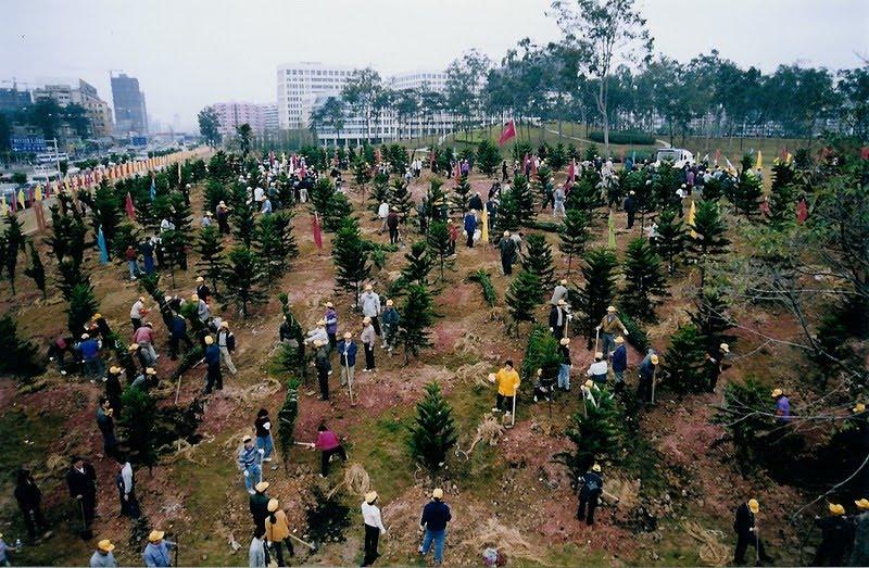 afforestation and deforestation essay