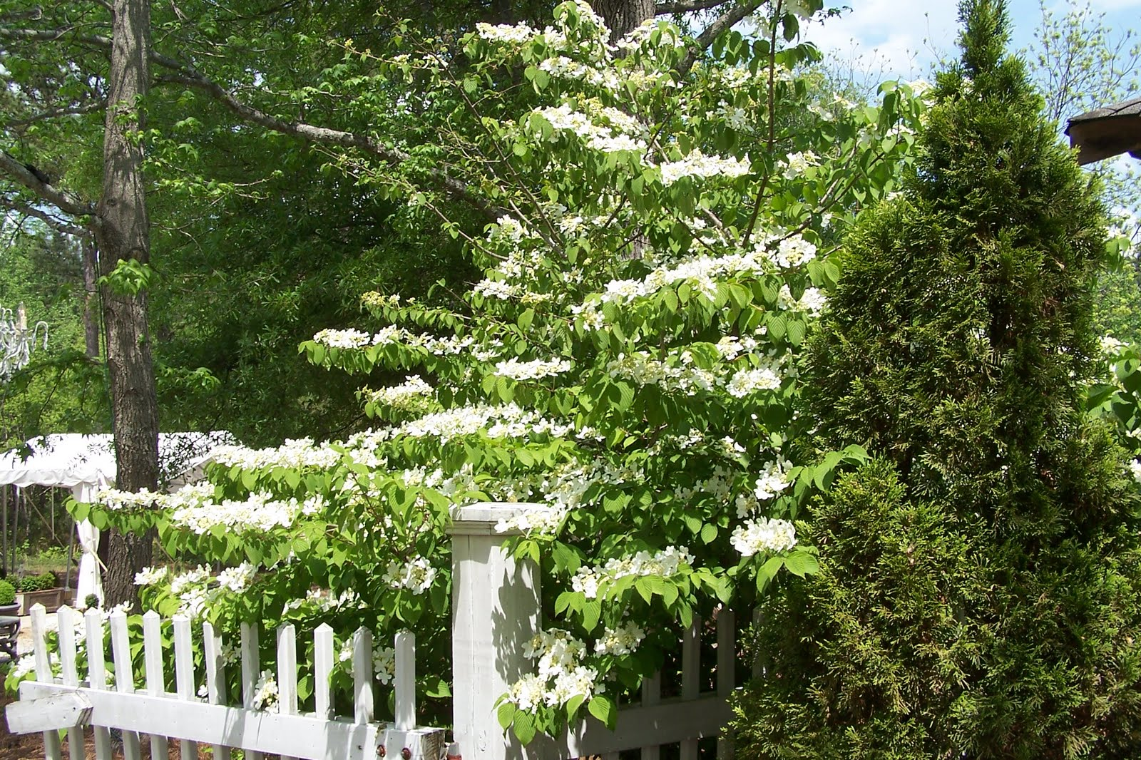 Tara dillard choosing a white landscape design for White garden design
