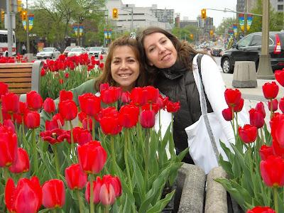 Las chichas y los tulipanes Libertadores Canadienses así llamados por los soldados que liberaron Holanda