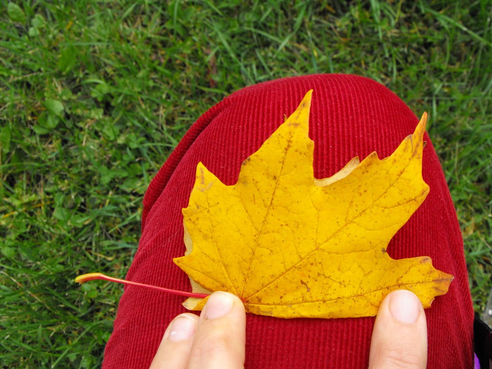 Корона из осенних листьев из бумаги своими руками