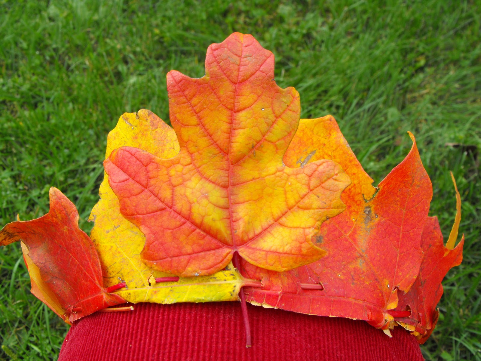 twig and toadstool autumn maple leaf crowns