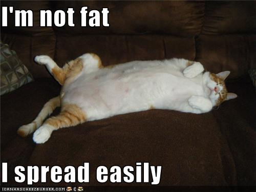 funny fat cat pictures. Fat can BE gross,