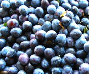 [plums]
