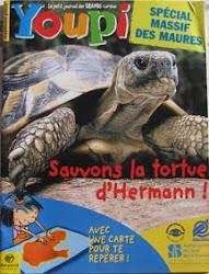 TORTUE D'HERMANN