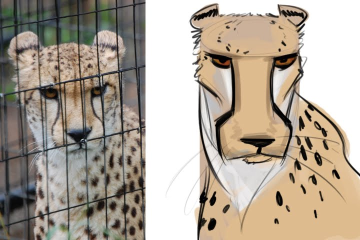 Force Character Design From Life Drawing By Mike Mattesi : Forced by mike mattesi cheetah character designs