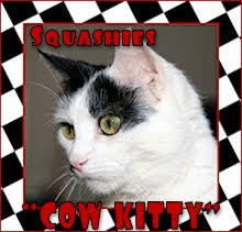Squashes is a Cow Kitty!