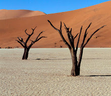 #7 - Sossusvlei & the 300 Foot Dunes of Namibia