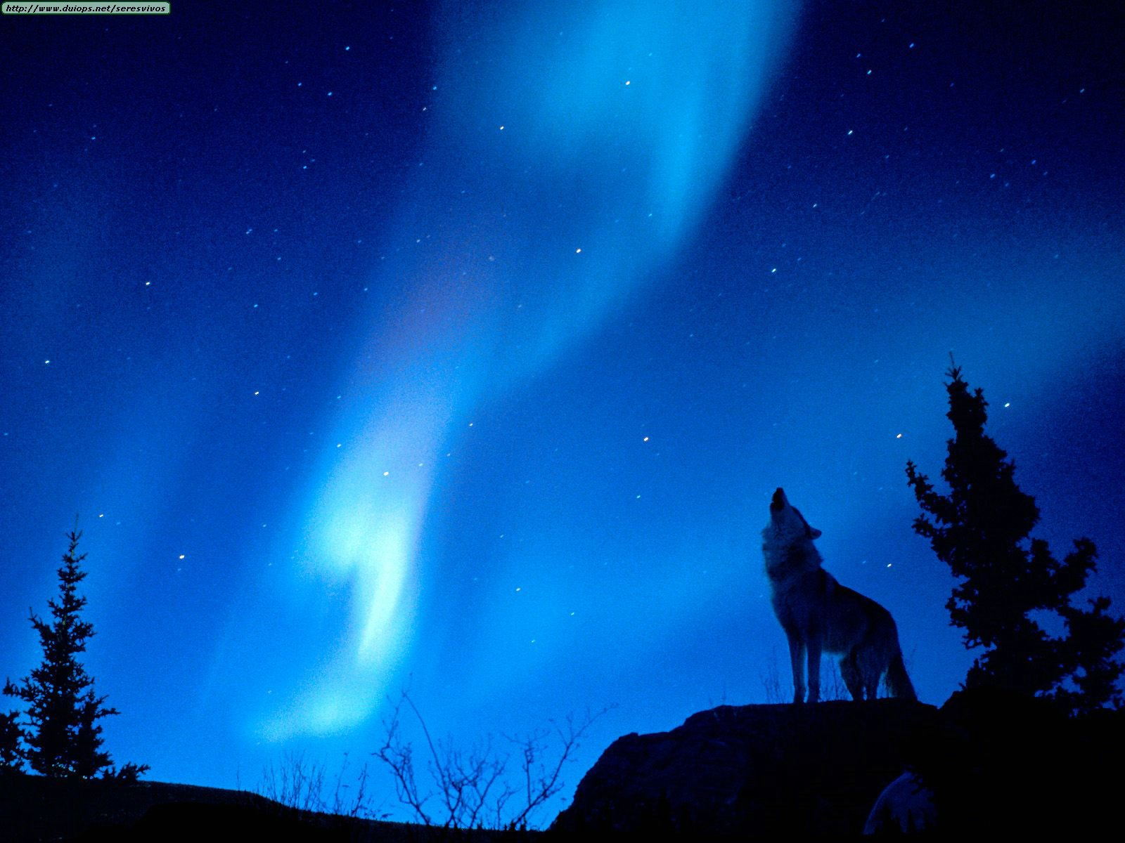[Evening+Howl.jpg]