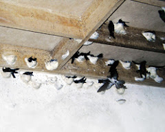 Nesting Can Be On the Wood Or The Cement Wall