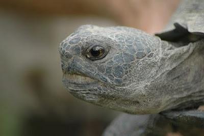 A Tortoise in A Cat's Blog