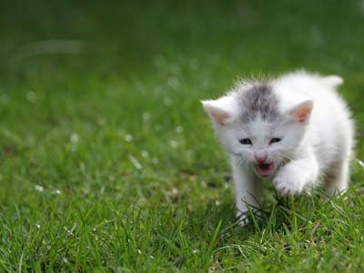 cat playing outdoor, cute picture