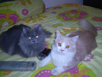 black cat friends