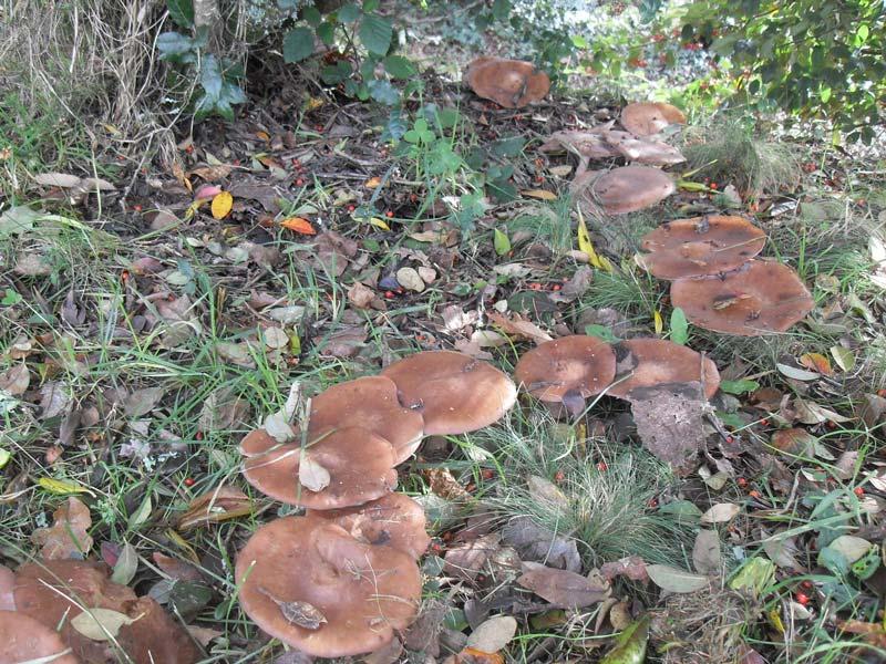 O vídeo como retirar um fungo de pregos